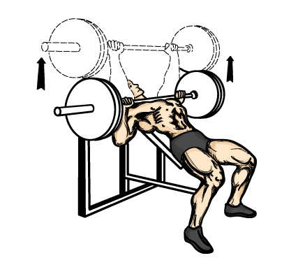 your chest muscles  make sure you mix flat and incline bench pressIncline Press
